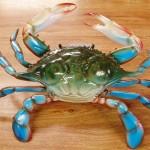 10 inch blue crab decoration