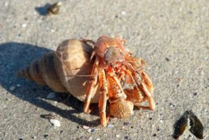 changing shells and molting